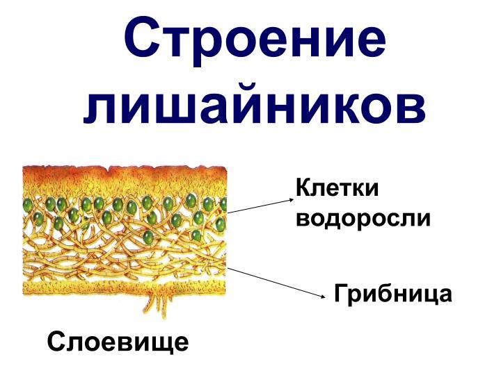 download Петр Великий (комплект из 3