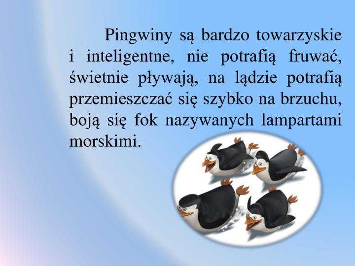 Pingwiny są bardzo towarzyskie                          i inteligentne, nie potrafią fruwać, świetnie pływają, na lądzie potrafią przemieszczać się szybko na brzuchu, boją się fok nazywanych lampartami