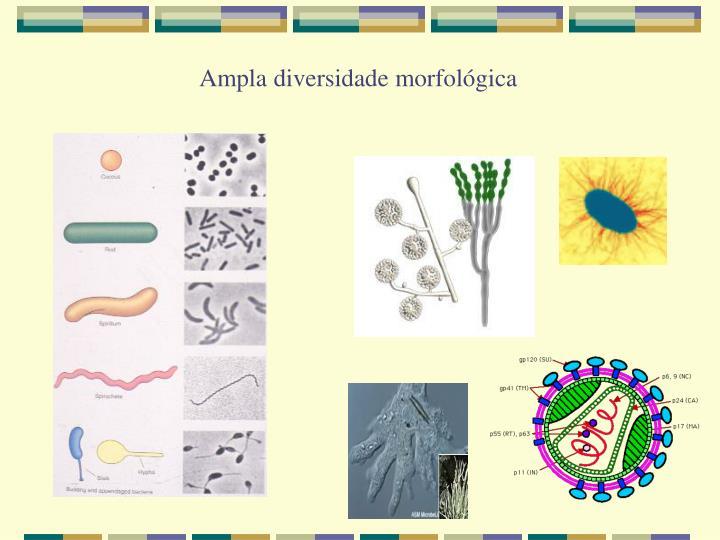 Ampla diversidade morfológica