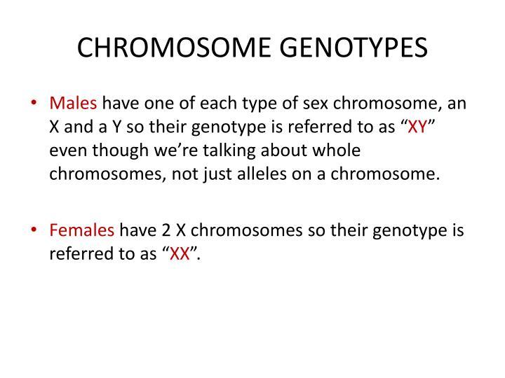 CHROMOSOME GENOTYPES