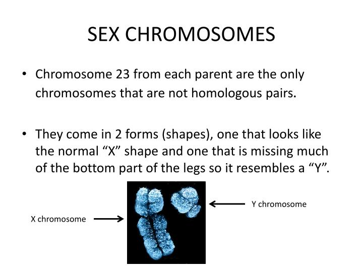SEX CHROMOSOMES