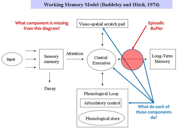 Ppt Working Memory Model Quiz Powerpoint Presentation Id5875352