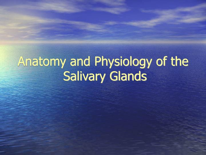 anatomy and physiology of the salivary glands