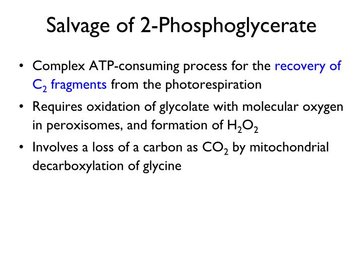 Salvage of 2-Phosphoglycerate
