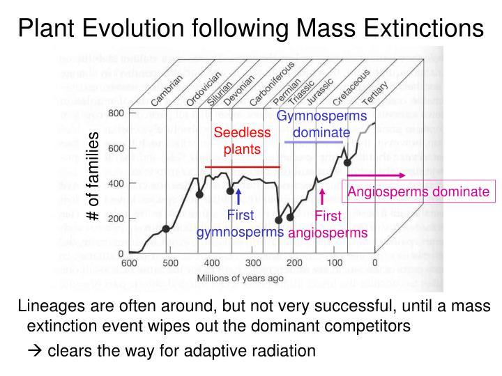 Plant Evolution following Mass Extinctions