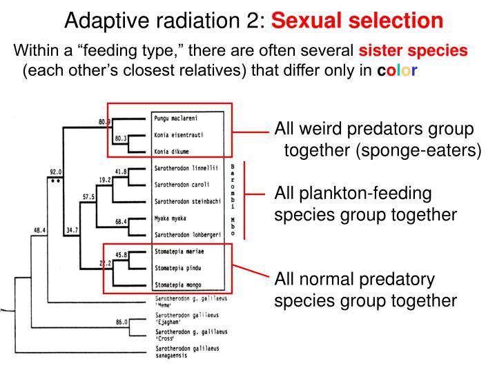 Adaptive radiation 2: