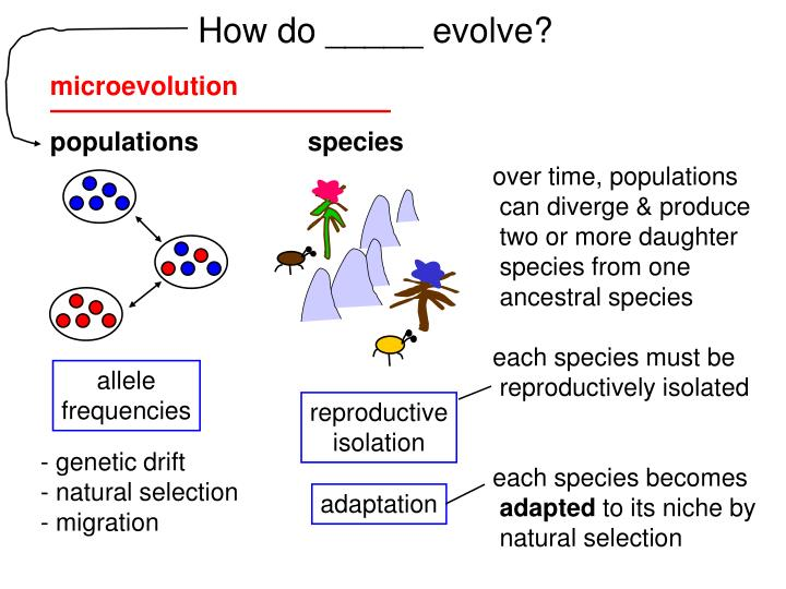 How do _____ evolve?