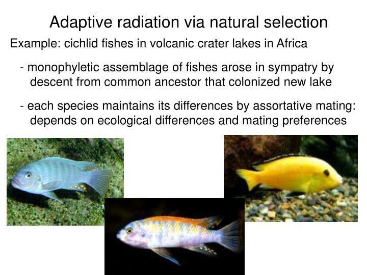 Adaptive radiation via natural selection
