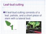 leaf bud cutting