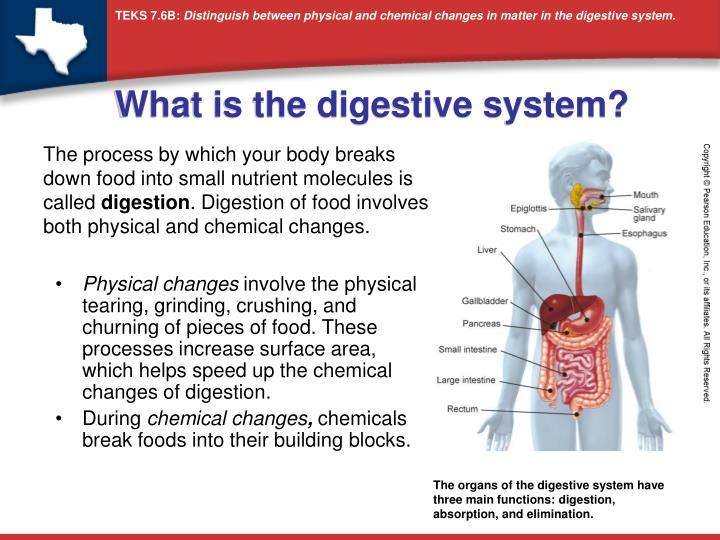 chemical and physical processes of digestion review sheet Review sheet 8 carbohydrate digestion the following questions refer to activity 1: chemical and physical processes of digestion exercise.