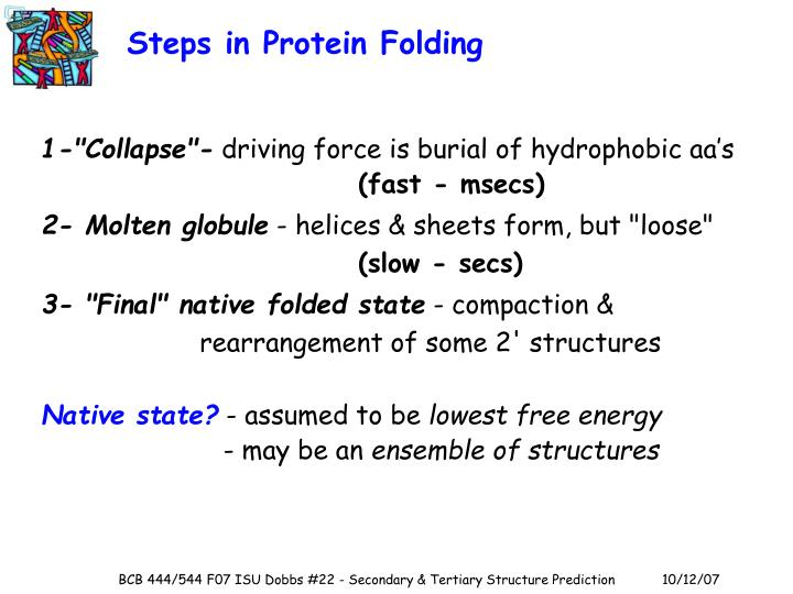 Steps in Protein Folding