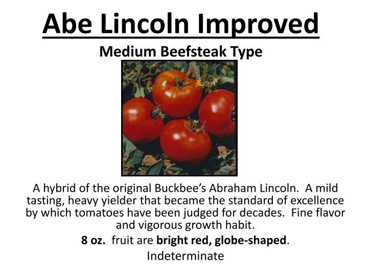 Abe lincoln improved medium beefsteak type