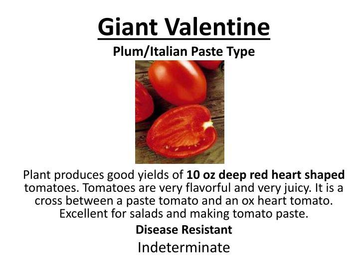 Giant Valentine