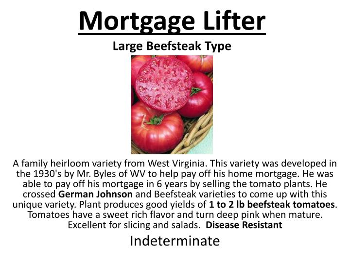 Mortgage Lifter