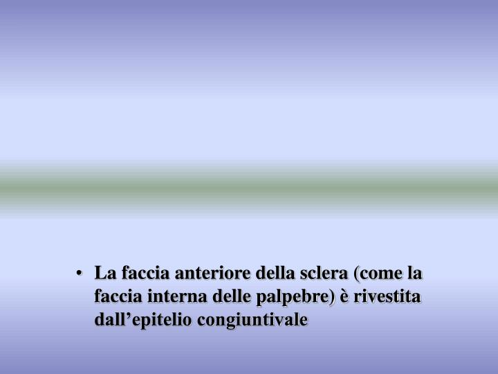 La faccia anteriore della sclera (come la faccia interna delle palpebre) è rivestita dall'epiteli...