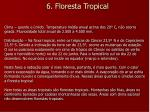 6 floresta tropical