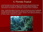 6 floresta tropical2