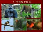 6 floresta tropical3