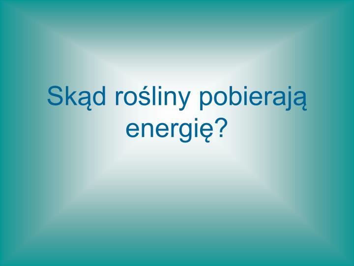 Skąd rośliny pobierają energię?