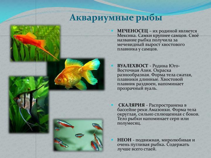 Родина аквариумные рыбки название и их родина