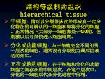 hierarchical tissue