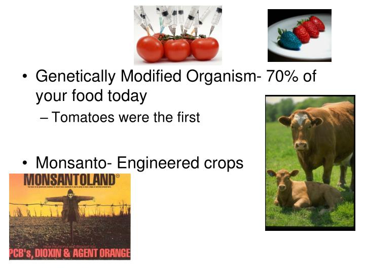 Genetically Modified Organism- 70% of your food today