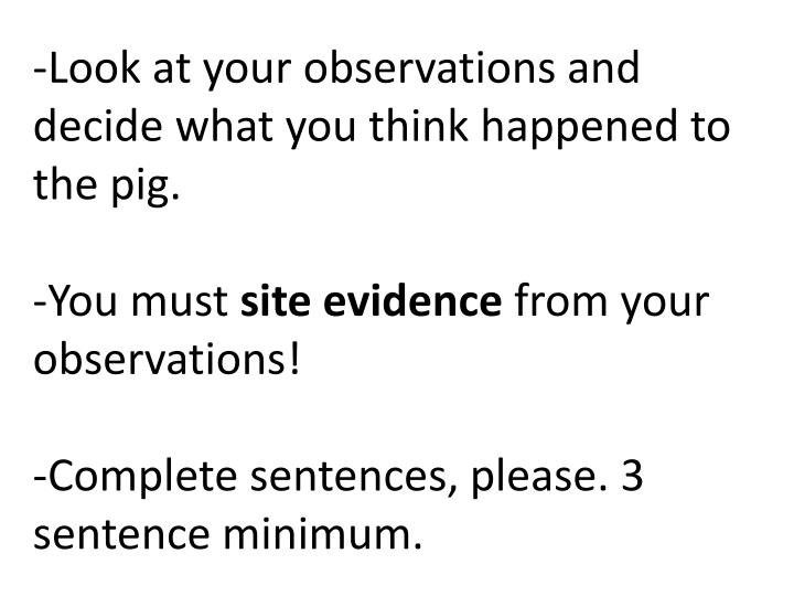 -Look at your observations and decide what you think happened to the pig.