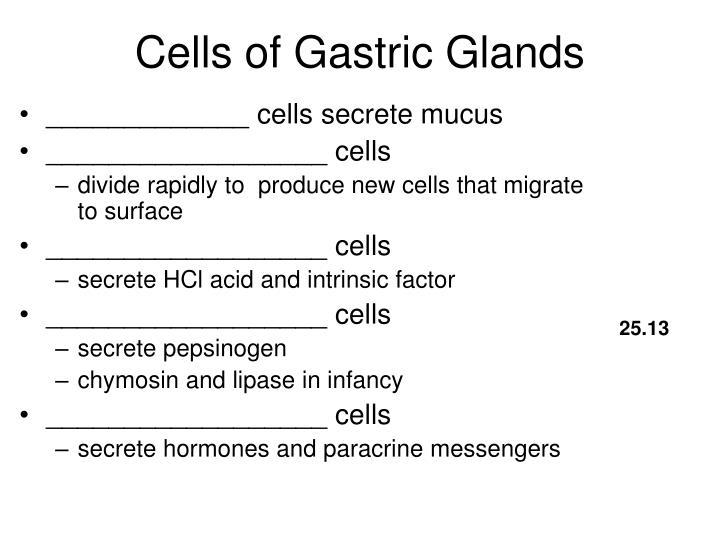 Cells of Gastric Glands
