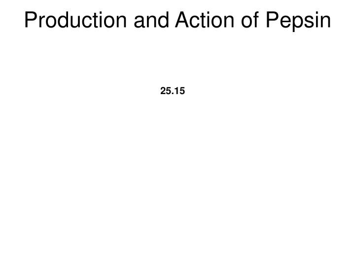 Production and Action of Pepsin
