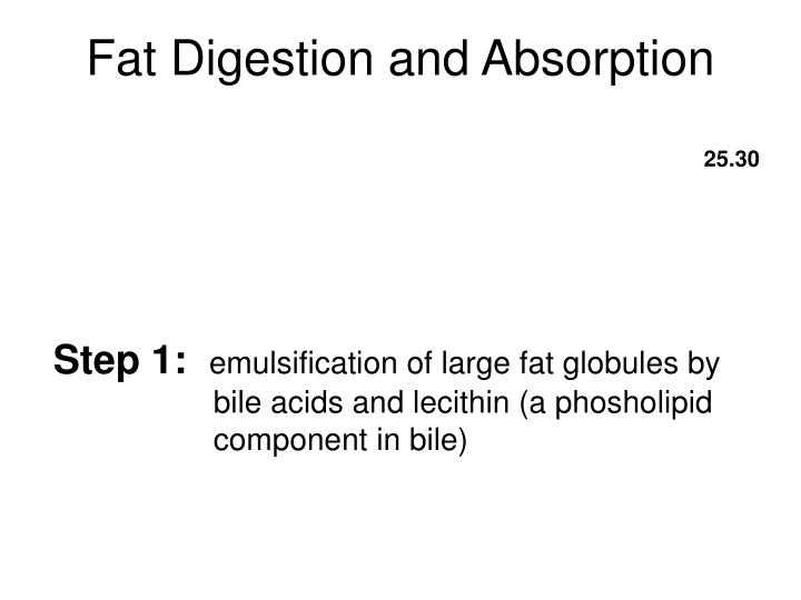 Fat Digestion and Absorption