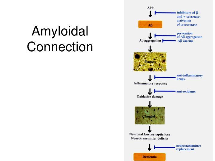 Amyloidal Connection