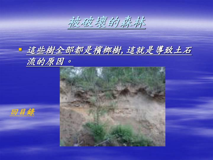 被破壞的森林