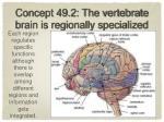 concept 49 2 the vertebrate brain is regionally specialized2