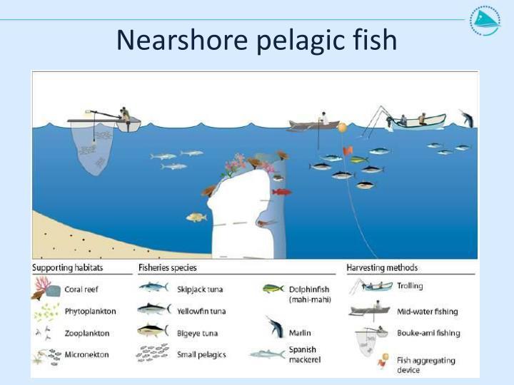 Nearshore pelagic fish