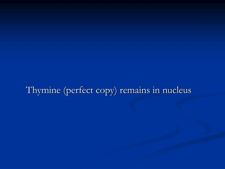 Thymine (perfect copy) remains in nucleus
