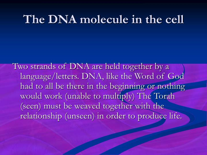 The DNA molecule in the cell