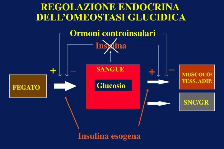 Insulina esogena