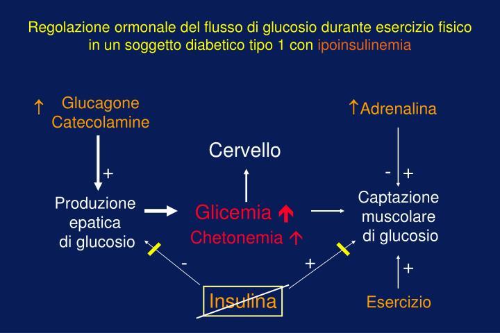 Regolazione ormonale del flusso di glucosio durante esercizio fisico