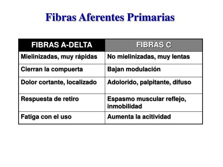 Fibras Aferentes Primarias