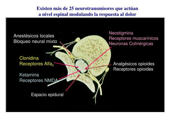 Existen más de 25 neurotransmisores que actúan