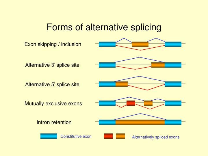 Forms of alternative splicing
