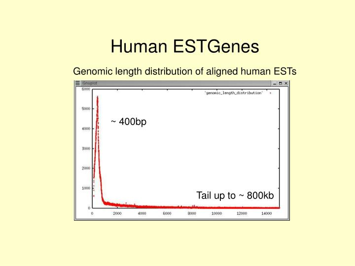 Human ESTGenes