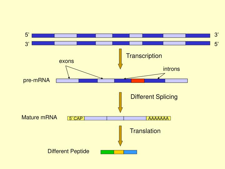 Different Splicing