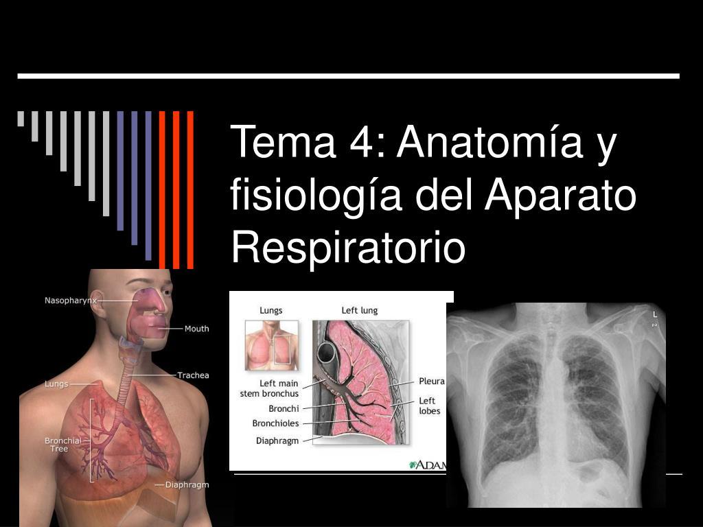 PPT - Tema 4: Anatomía y fisiología del Aparato Respiratorio ...