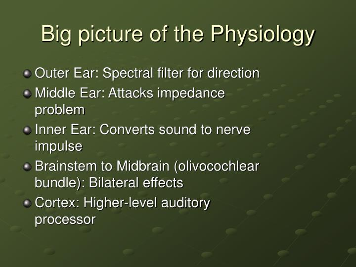 Big picture of the Physiology