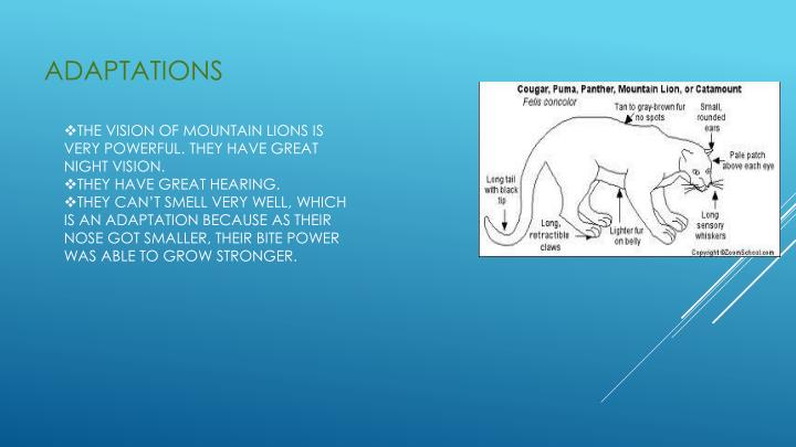 panther adaptations