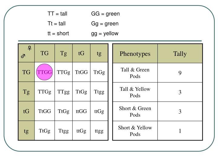 TT = tallGG = green