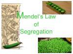 m endel s law of segregation