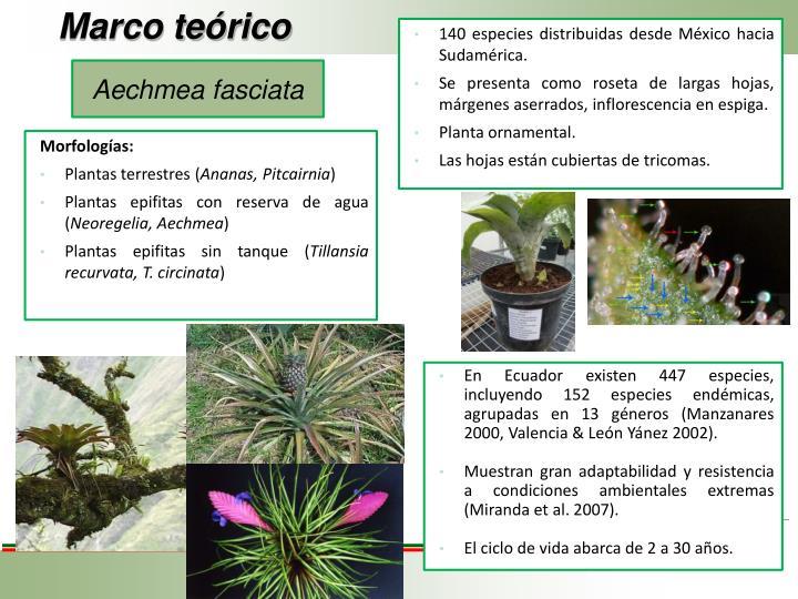 140 especies distribuidas desde México hacia Sudamérica.