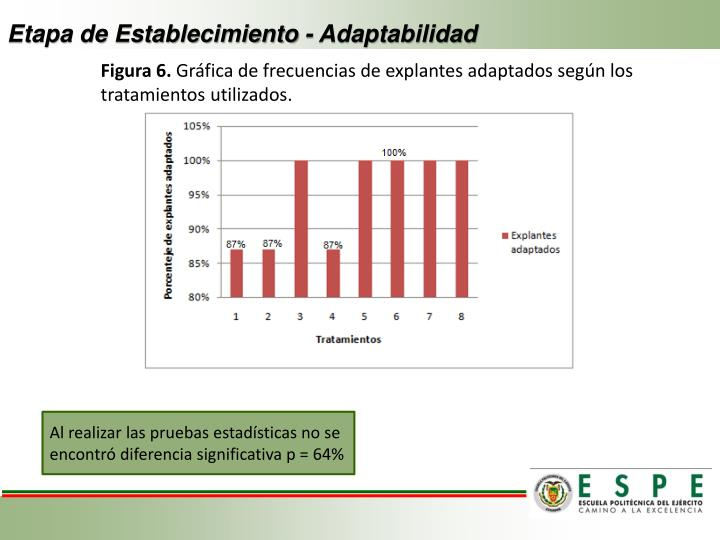Etapa de Establecimiento - Adaptabilidad
